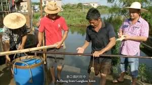 第6集 渔米之乡