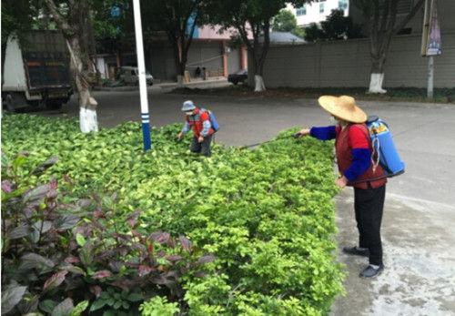 【南头】节前统一灭鼠灭蚊,降低鼠蚊密度