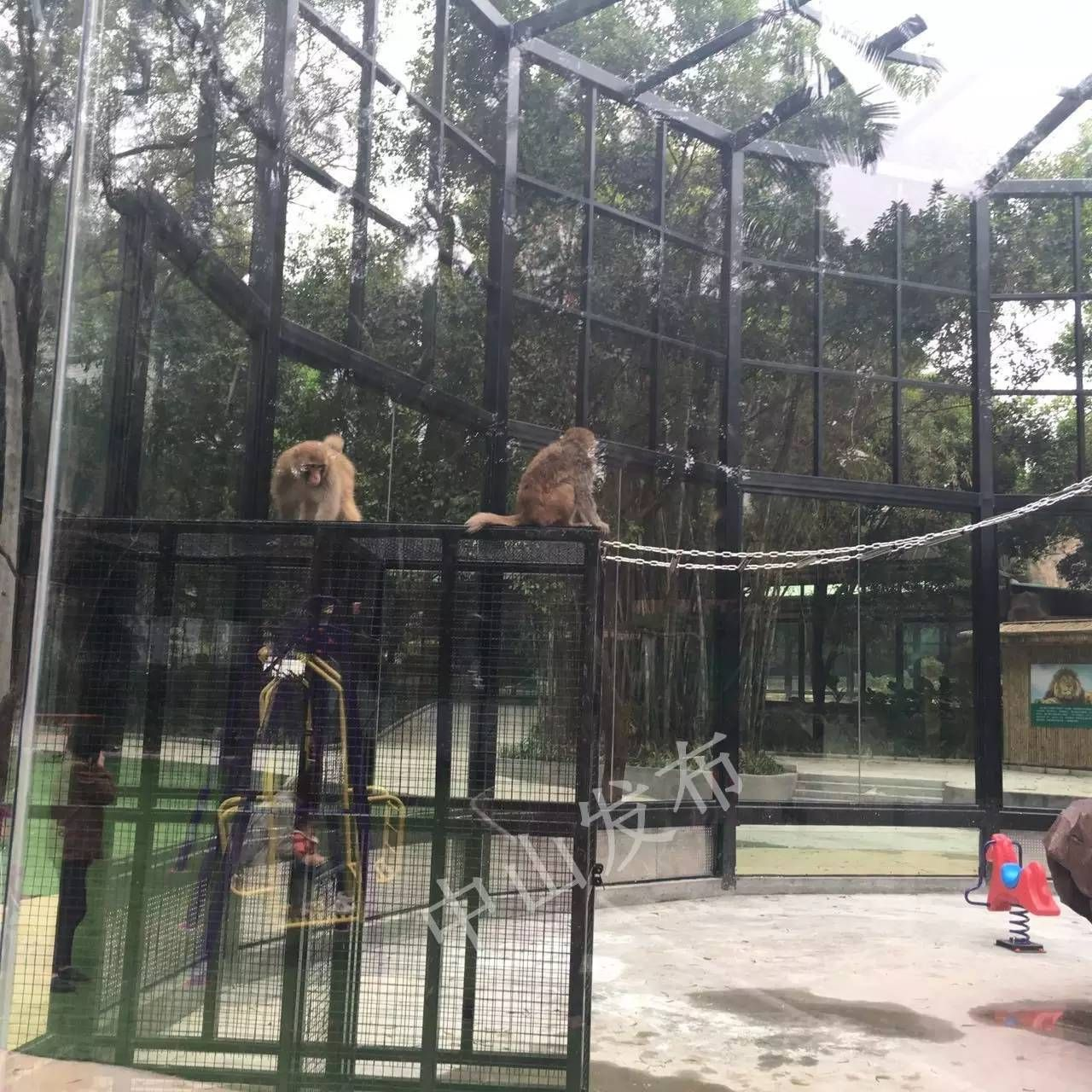 中山一动物园升级后开放,小孩最喜欢了