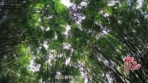 中山宣傳片0309