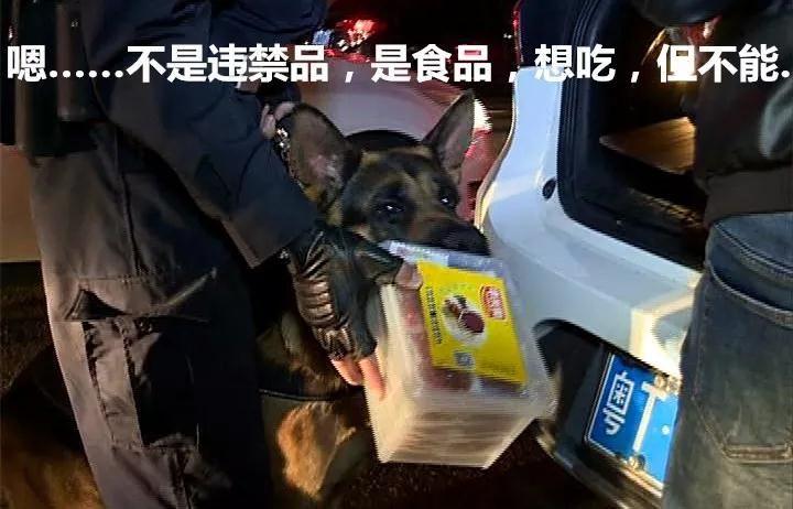 """狗年说狗:中山""""明星警犬""""守中山平安!来看它们的英姿!"""