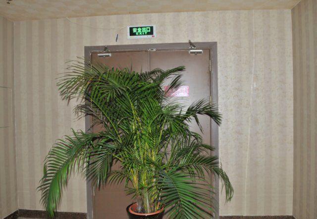 【火炬】因为这些盆栽,这家水疗休闲会所被罚5000元