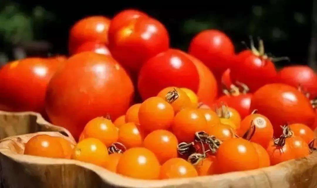 原来,番茄这样吃才更有营养?你搞错了吗?