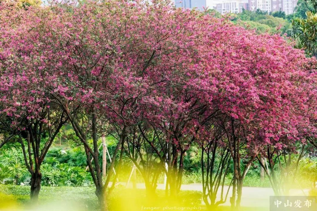 最美时刻!紫马岭公园这处仙境吸引众多游人,抓紧时间了