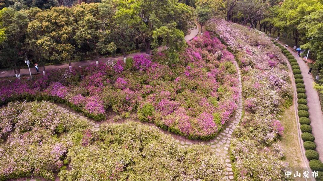 占地1万多㎡!这片花海惊艳了中山,正是最佳观?#25512;冢?#20320;去了吗?