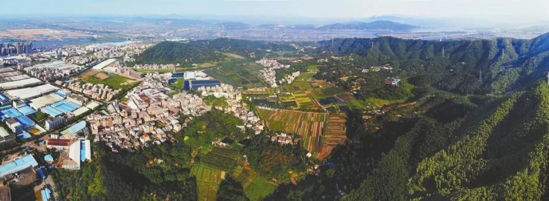 美名享譽全國!中山這個小村莊竟藏著不少傳奇,你都知道嗎?