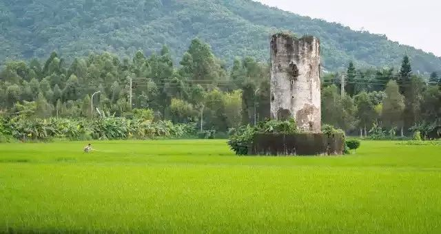 【南區】剛剛公布!中山有一條廣東美麗鄉村特色村!