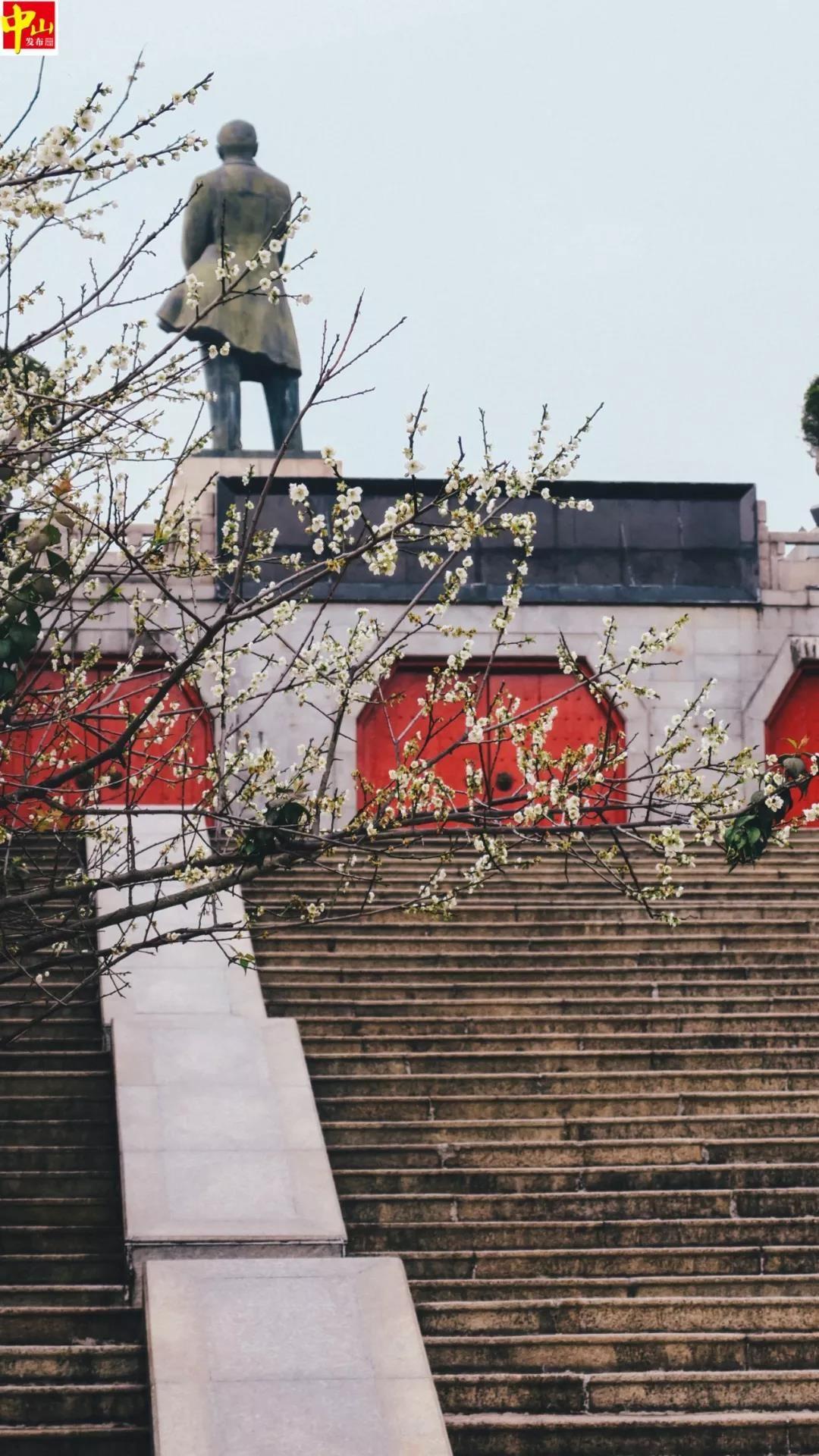 """""""下雪啦""""!中山城區有大片花海綻放,太美了!趁周末約起"""