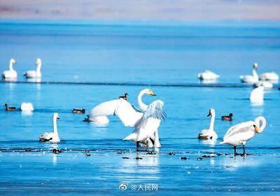 青海湖景區將向全國醫護人員免費開放