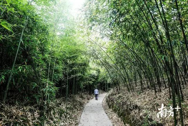 新鮮竹筍,出山了!