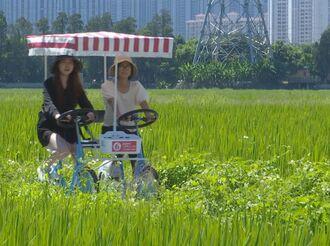 踩单车、看翠绿色的稻浪…中山这个地方美如画,约吗?