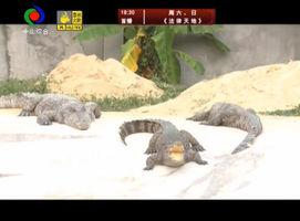 生活大玩家(2016-12-5)