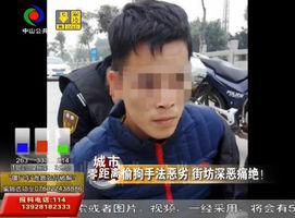 """神湾:男子偷狗未遂 被民警当场""""抓到正"""""""