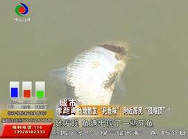 鱼塘出现死鱼,处理不好臭味扰民惹争议