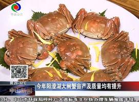 吃货注意了!第一批阳澄湖大闸蟹已经到达中山经销商手中