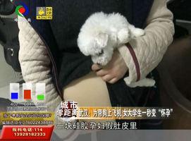 """武汉:为带狗上飞机 女大学生一秒变""""怀孕"""""""