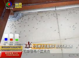 小区蚊子泛滥成灾 居民不胜其烦