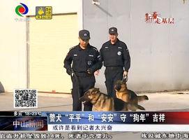 """(新春走基层)警犬""""平平""""和""""安安""""守""""狗年""""吉祥"""