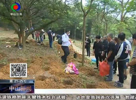 民政资讯:中山举办骨灰树葬活动