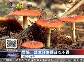警惕!野生陌生蘑菇吃不得