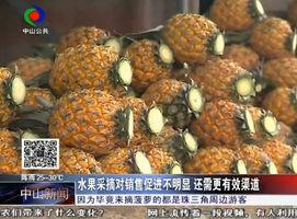 记者调查:水果采摘是不是果农的兴农之路?