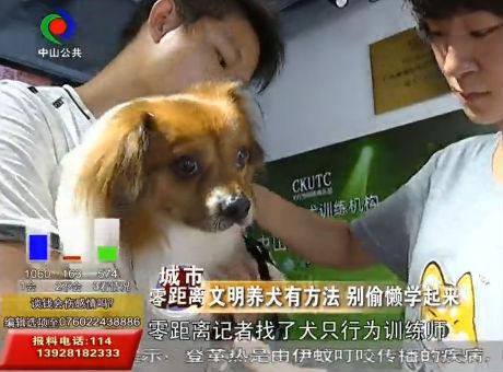 大涌4岁男童被狗咬伤,媒体发起文明养犬倡议