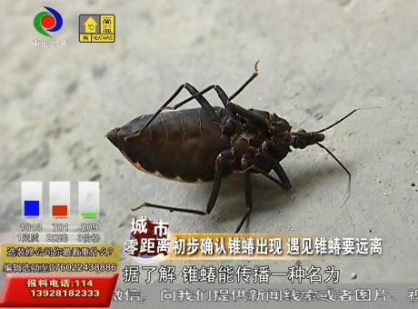 东升民众等地相继发现疑似锥蝽昆虫发现锥蝽要远离