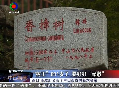 """中山""""树王""""有多少岁?市政府公告揭秘!"""