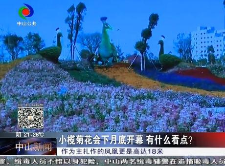 小榄菊花会下月底开幕 有什么看点?