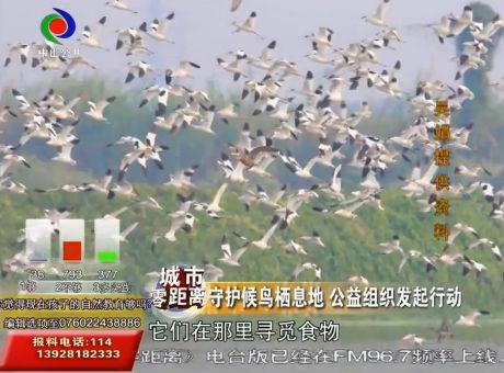 守护候鸟栖息地 公益组织发起行动