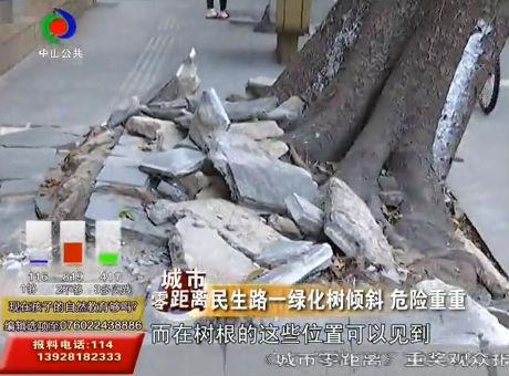 民生路一绿化树倾斜 危险重重