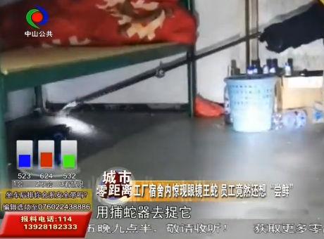 """工厂宿舍内惊现眼镜王蛇 员工竟然还想""""尝鲜"""""""