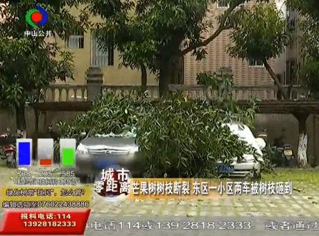 芒果树树枝断裂 东区一小区两车被树枝砸