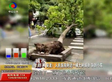 突發!人民醫院附近一棵大樹傾倒 砸到小車