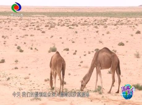 撒哈拉沙漠