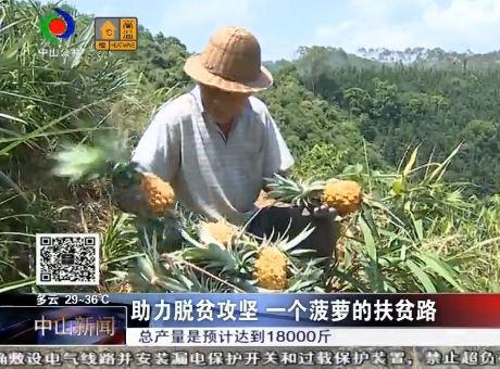 助力脫貧攻堅 一個菠蘿的扶貧路