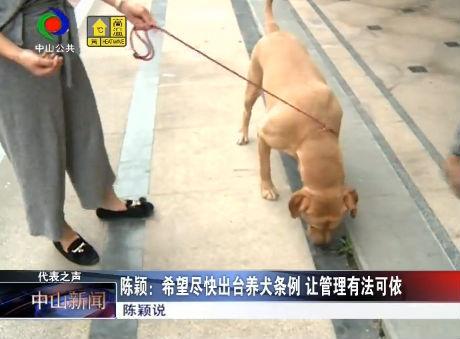 人大代表陳穎:望盡快出臺養犬條例 讓管理有法可依
