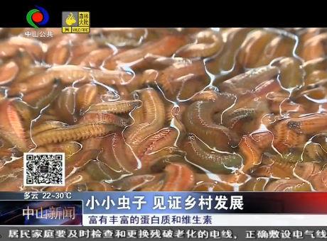 正造上市产量锐减?神湾禾虫今年减产?