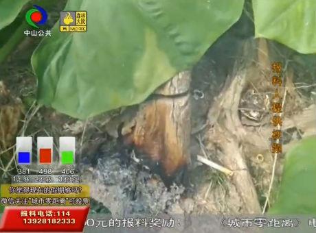 楼上住户频频扔烟头 楼下枯树被点燃?