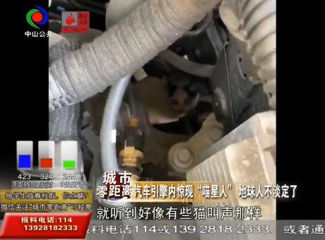 """視頻丨汽車引擎內驚現""""喵星人"""" 地球人不淡定了"""