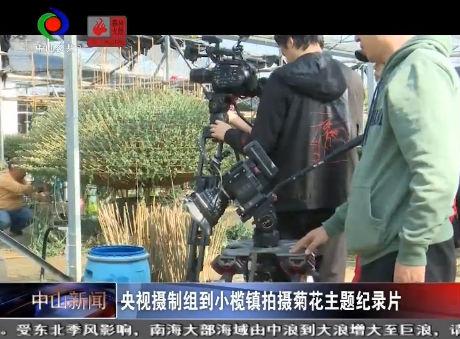 視頻丨央視攝制組到小欖鎮拍攝菊花主題紀錄片