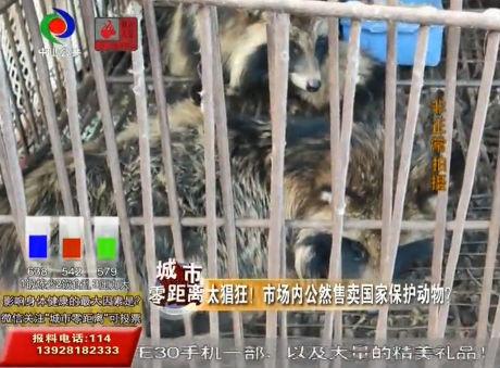 視頻丨太猖狂!市場內公然售賣國家保護動物?