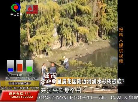 视频丨星晨花园附近河涌水杉树被砍?
