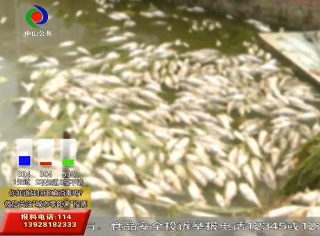 城市零距離  三角一魚塘的魚突然全死光?