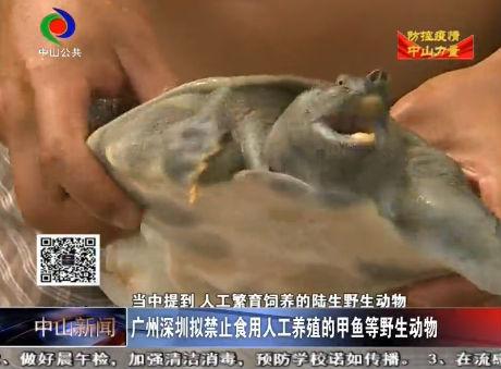 中山新聞| 中山人餐桌上還能看到人工養殖的甲魚 牛蛙嗎?
